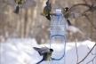 У Чернівцях стартувала акція «Підгодуй пташку взимку» (Фото)