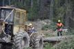 У Чернівецькій області будуватимуть нові лісові дороги
