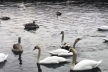 Буковинці б'ють на сполох: озеро в Чорториї може зникнути (Відео)