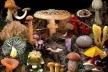 Буковинським грибникам: як вберегтися від отруєння