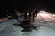 У ДТП на Буковині загинув кінь (Фото)