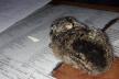 На Буковині леди не спалили зайченя (Фото)