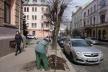 У Чернівцях висаджують липи вартістю у три тисячі гривень
