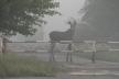 Чорнобильська фауна: які тварини живуть у зоні відчуження (фото)