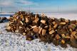 На Буковині крадуть ліс навіть неповнолітні