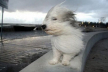 Штормове попередження: на Буковині очікують посилення вітру