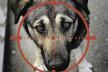Кількість випадків жорстокого поводження з тваринами за час карантина збільшилася