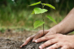 Що висаджуватимуть на Буковині з мільярда нових дерев