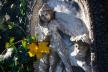Барвисті ознаки осені у Чернівцях (ФОТО)
