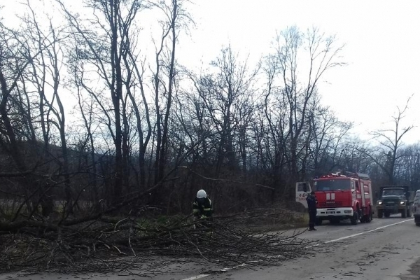 На автошляху «Чернівці-Снятин» дерево впало на автівку і травмувало чоловіка (Фото)