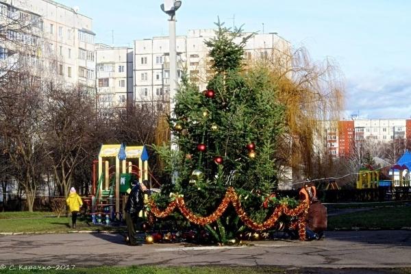 З поваленої ялинки у Чернівцях демонтували прикраси та обіцяють відновити новорічне дерево (Фото)