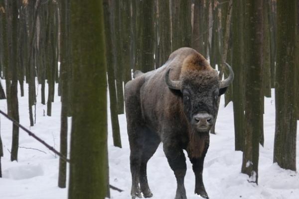 Чернівецька ОДА придбала трьох тварин на суму 190 тисяч гривень