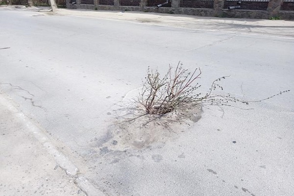 Дешево і сердито: у Чернівцях з ям, де вкрали кришки каналізаційних люків, «ростуть» дерева (Фото)