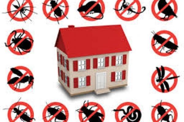 Фахівці закликають здійснити дератизаційні заходи у будинках Чернівців