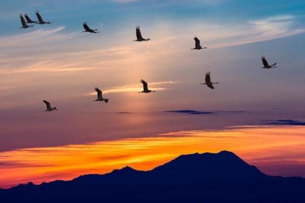 На Буковині відзначають Всесвітній день мігруючих птахів