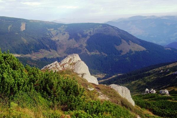 Невідома Буковина: чому скелі, де росте едельвейс, не досліджені науковцями