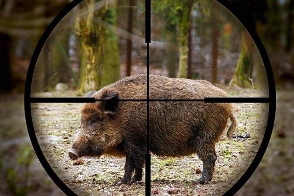У Чернівецькій області відкрили сезон полювання