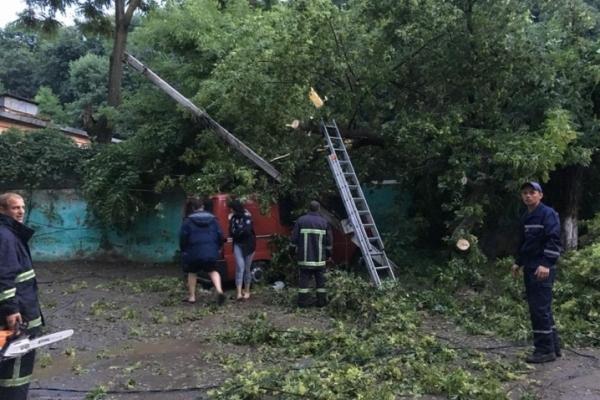 Повалені дерева пошкодили маршрутку та дві автівки у Чернівцях (Фото)