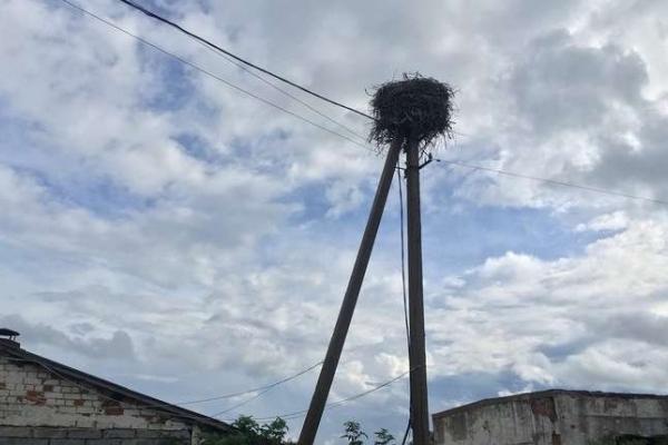 На Буковині врятували лелеченя, яке випало з гнізда