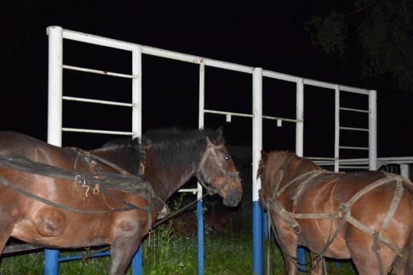 Контрабандисти на конях намагалися переправити цигарки до Румунії