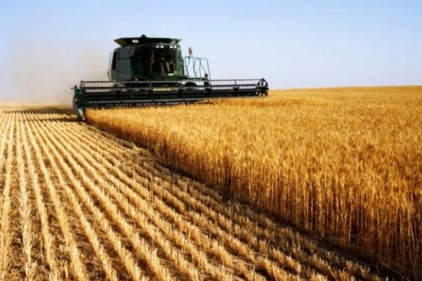 Голова Чернівецької ОДА турбується, як захистити урожай від пожеж