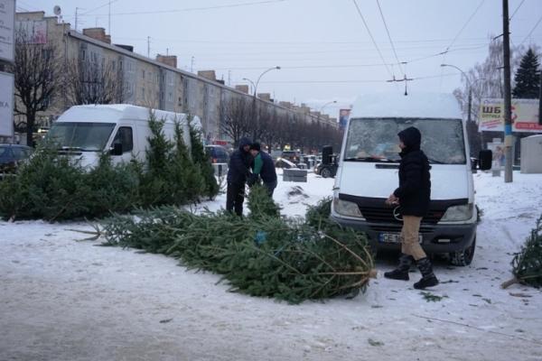 На ремонтній ділянці проспекту у Чернівцях розгорнули стихійну торгівлю новорічними ялинками