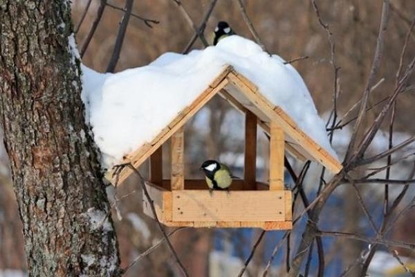 На Буковині допомагають птахам