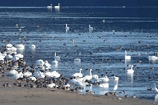 2 лютого — Всесвітній день водно-болотних угідь. Буковинці, бережіть природу!