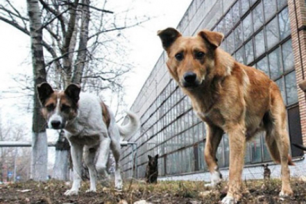 У Чернівцях масово вбивають безпритульних собак (Відео)