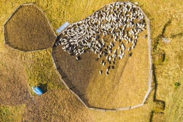 На Буковині допомагатимуть сільськогосподарським товаровиробникам