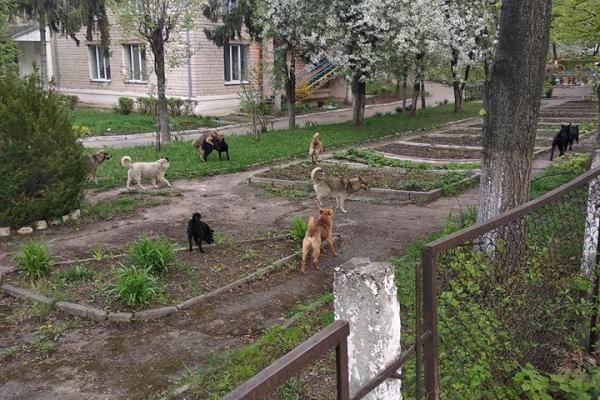 Чернівчани скаржаться на безпритульних собак (Фото)