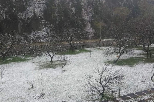На Буковині засипало снігом (фото)