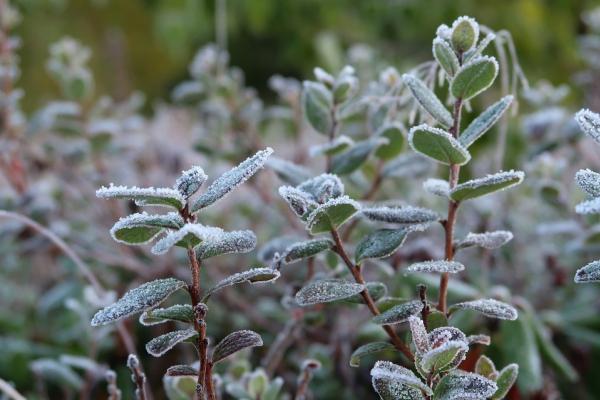 Сильні дощі та заморозки: на Буковині панує негода