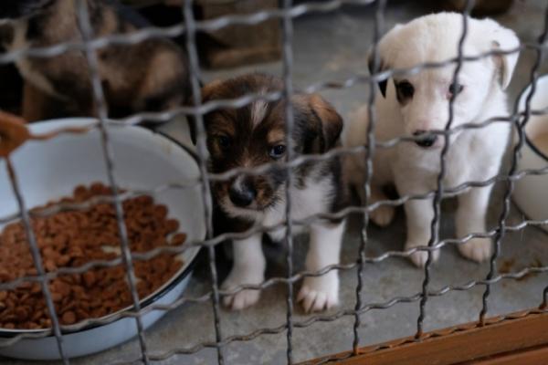 Чернівчани просять повернути на посаду керівника МКП «Притулок для тварин»