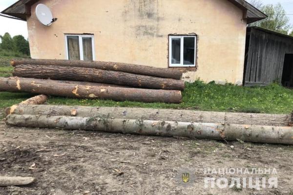 На Буковині поліція затримала крадія лісовини