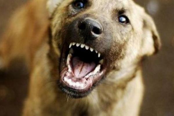 У Чернівцях бездомні собаки напали на жінку