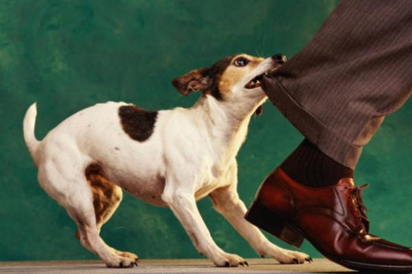 Маленький білий собака тримає в страху перехожих біля чернівецької гімназії №3