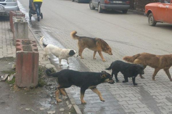У Чернівцях рахуватимуть безпритульних собак