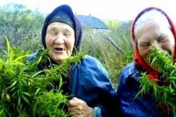 Завдання - виконати план. Чому на Буковині з пенсіонерів роблять макових «наркоторговців»?