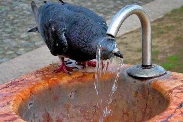 Сьогодні на чернівчан чекає спека до +34