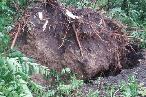 Дерева вирвало з корінням: на Буковині негода за кілька хвилин наробила біди (фото, відео)