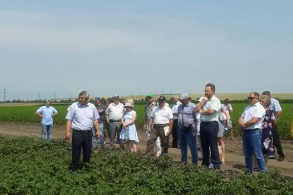 «День поля» відбувся на Буковині (Фото)