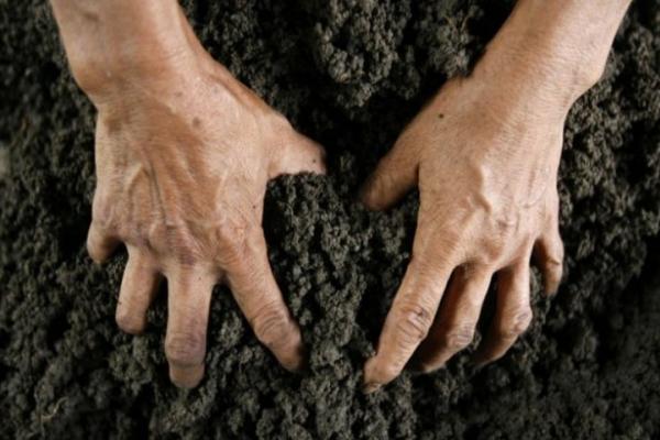 Аби вирощувати ячмінь, буковинець самовільно захопив землю