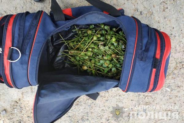 У буковинця вилучили 570 рослин снодійного маку (Фото)