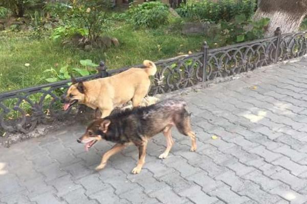 На чернівчанку напав безпритульний собака