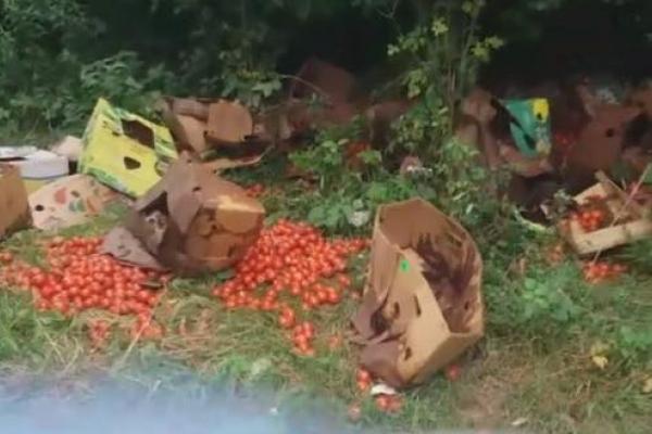 Помідори на березі Пруту викинули у Чернівцях (Фото, відео)