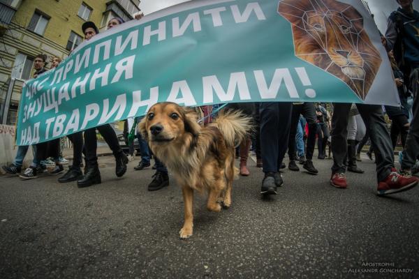 У Чернівцях відбудеться марш за права тварин