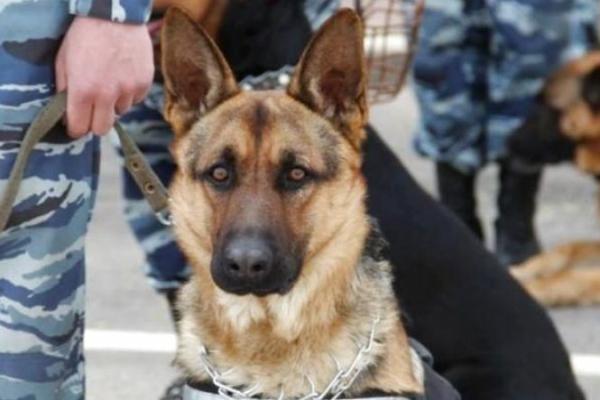 Собака допоміг буковинським прикордонникам затримати контрабандистів