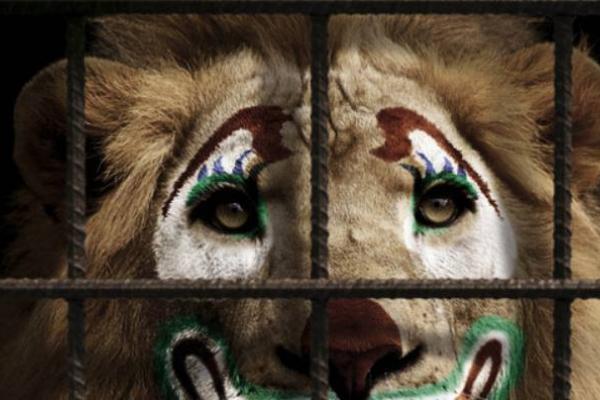 Чернівчан запрошують долучитися до акції  «Цирк без тварин»