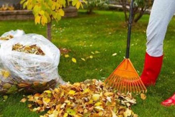 Куди чернівчанам здавати листя?